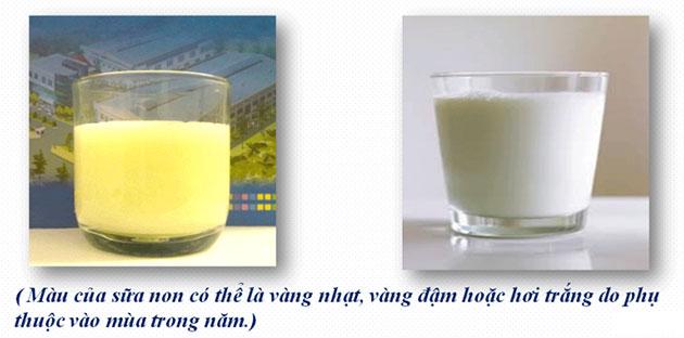 Phân biệt sữa non với sữa thường